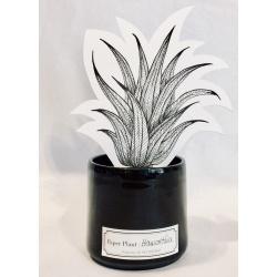 Le Nez Insurgé - Paper Plant Haworthia | Parfums de créateurs