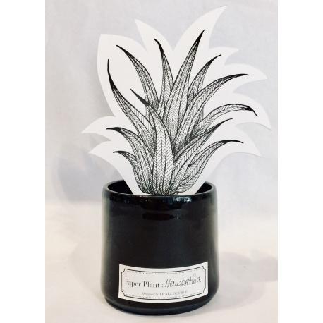 Paper Plant Haworthia